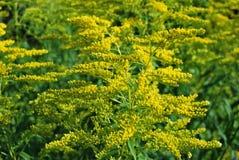 Bellezza selvaggia delle piante della foresta Immagine Stock