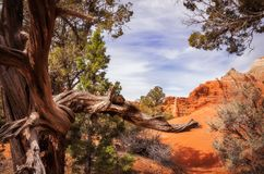 Bellezza unica del deserto al parco di Kodachrome nell'Utah Fotografia Stock