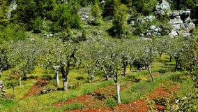 Bellezza verde Fotografia Stock