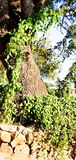 Bellezza verde dell'albero A della natura immagine stock