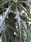Bellezza verde snella fotografia stock libera da diritti