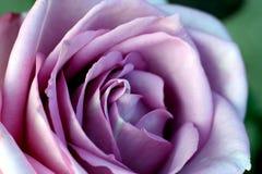 Bellezza viola Fotografia Stock