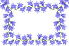 Bellflovers frame Royalty Free Stock Image