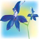 bellflower dziki śródpolny Fotografia Stock