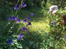 Bellflowers calling little girl royalty free stock photo