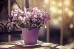 Bellflowers coloreados violeta de la campánula del vintage Imágenes de archivo libres de regalías