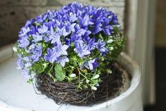 Bellflowers en flowershop foto de archivo