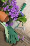 Bellflowers y el cultivar un huerto Fotos de archivo