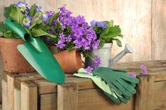Bellflowers y el cultivar un huerto Fotografía de archivo