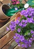 Bellflowers y el cultivar un huerto Fotografía de archivo libre de regalías