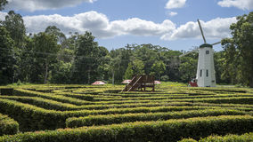 Bellingham Hedge Maze. A complex ornamental hedge maze at Bellingham maze in Tanawha in Australia. The platform in the middle of the photo is the center if the Stock Photography