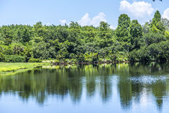 Bellingrath Gardens and Home Royalty Free Stock Photos