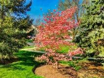 Bello albero Fotografia Stock