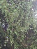 Bello albero Immagine Stock