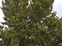 Bello albero Fotografie Stock