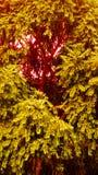 Bello albero con l'immagine di sfondo di effetto di luce solare e la progettazione generate da computer della carta da parati fotografia stock libera da diritti