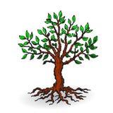 Bello albero con le foglie, fumetto su un fondo bianco fotografia stock libera da diritti