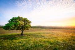 Bello albero con un tramonto sbalorditivo fotografia stock