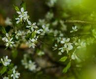 Bello albero del fiore Immagine Stock