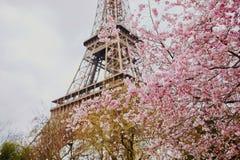 Bello albero del fiore di ciliegia e la torre Eiffel Fotografia Stock