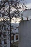 Bello albero del ramo a Parigi Fotografia Stock Libera da Diritti