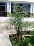 Bello albero della mia casa Fotografia Stock Libera da Diritti