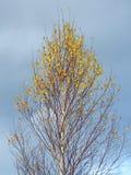 Bello albero di autunno Fotografie Stock