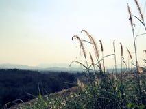 Bello albero di erba in collina immagini stock libere da diritti