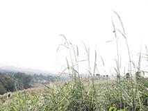 Bello albero di erba in collina fotografia stock libera da diritti
