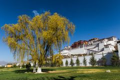 Bello albero di salice davanti a Palazzo del Potala, Lhasa, Tibet Immagini Stock