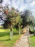 Bello albero e bella vista del cielo alla mattina immagini stock libere da diritti