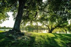 Bello albero ed il fiume Fotografie Stock