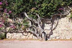 Bello albero fiorito Fotografia Stock Libera da Diritti