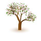 Bello albero isolato del fiore di ciliegia Fotografie Stock Libere da Diritti