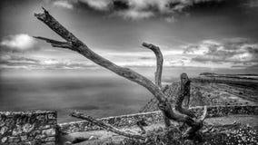 Bello albero morto Fotografia Stock