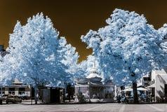 Bello albero nella vista infrarossa, colori irreali, giorno soleggiato Fotografie Stock Libere da Diritti