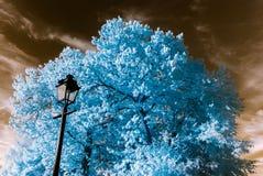 Bello albero nella vista infrarossa, colori irreali, giorno soleggiato Immagine Stock