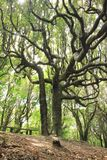 Bello albero in NZ, viaggiante Fotografie Stock
