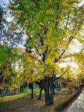 Bello albero in Roses& x27; parco în Timisoara fotografia stock libera da diritti
