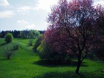 Bello albero rosso Fotografia Stock