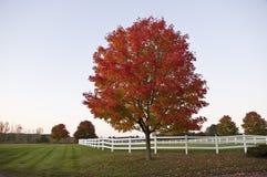 Bello albero rosso in autunno, Vermont, S.U.A. Fotografie Stock Libere da Diritti