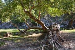Bello albero sconosciuto nelle montagne fotografie stock