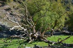 Bello albero sconosciuto nelle montagne immagine stock libera da diritti