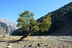 Bello albero sconosciuto nelle montagne fotografia stock