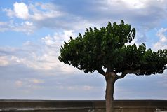 Bello albero solo con cielo blu nuvoloso nei precedenti Fotografia Stock Libera da Diritti