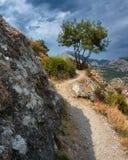 Bello albero su una scogliera Il percorso alla vecchia fortezza in Sudak Montagne nei precedenti Fotografie Stock Libere da Diritti