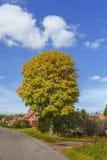 Bello albero in un piccolo villaggio, paesaggio in un giorno soleggiato Immagini Stock Libere da Diritti