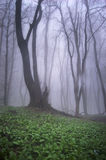 Bello albero in una foresta con erba verde immagini stock