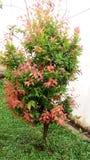 Bello albero verde e rosso Fotografia Stock