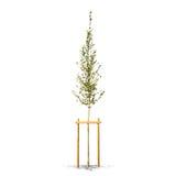 Bello albero verde su un fondo bianco nell'alta definizione Fotografie Stock